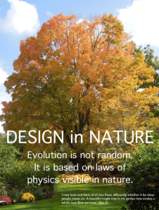 Design in NAture - KOGAINON